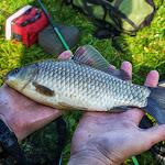 20140510_Fishing_Stara_Moshchanytsia_011.jpg