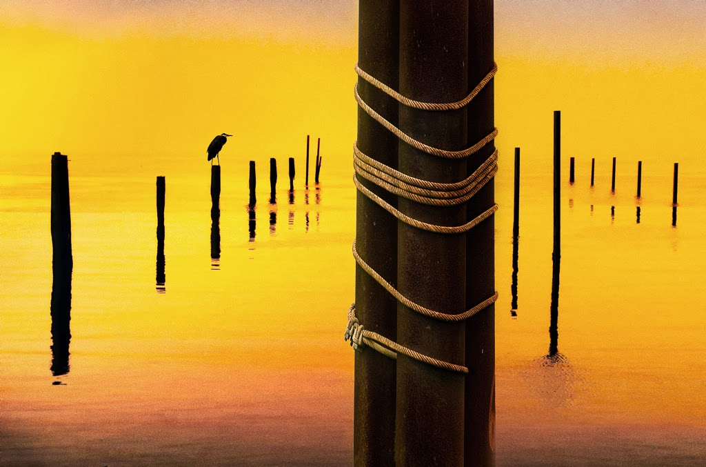 """Posts at Sunset"" by Witta Priester - 2nd place Print"
