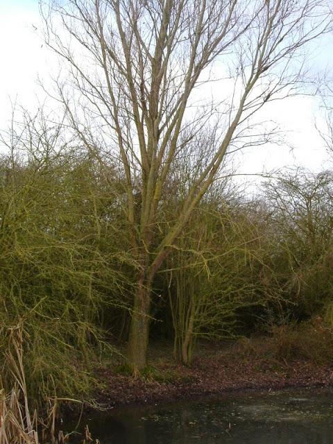 Conservation Area November 2008 - DSCF1347.jpg