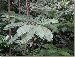 20151228_tree fern (Small)