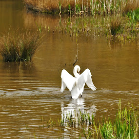 Time For A Dip by Scott Williams-Collier - Animals Birds ( animals, nature, birds )