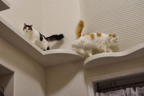 lдом для кота