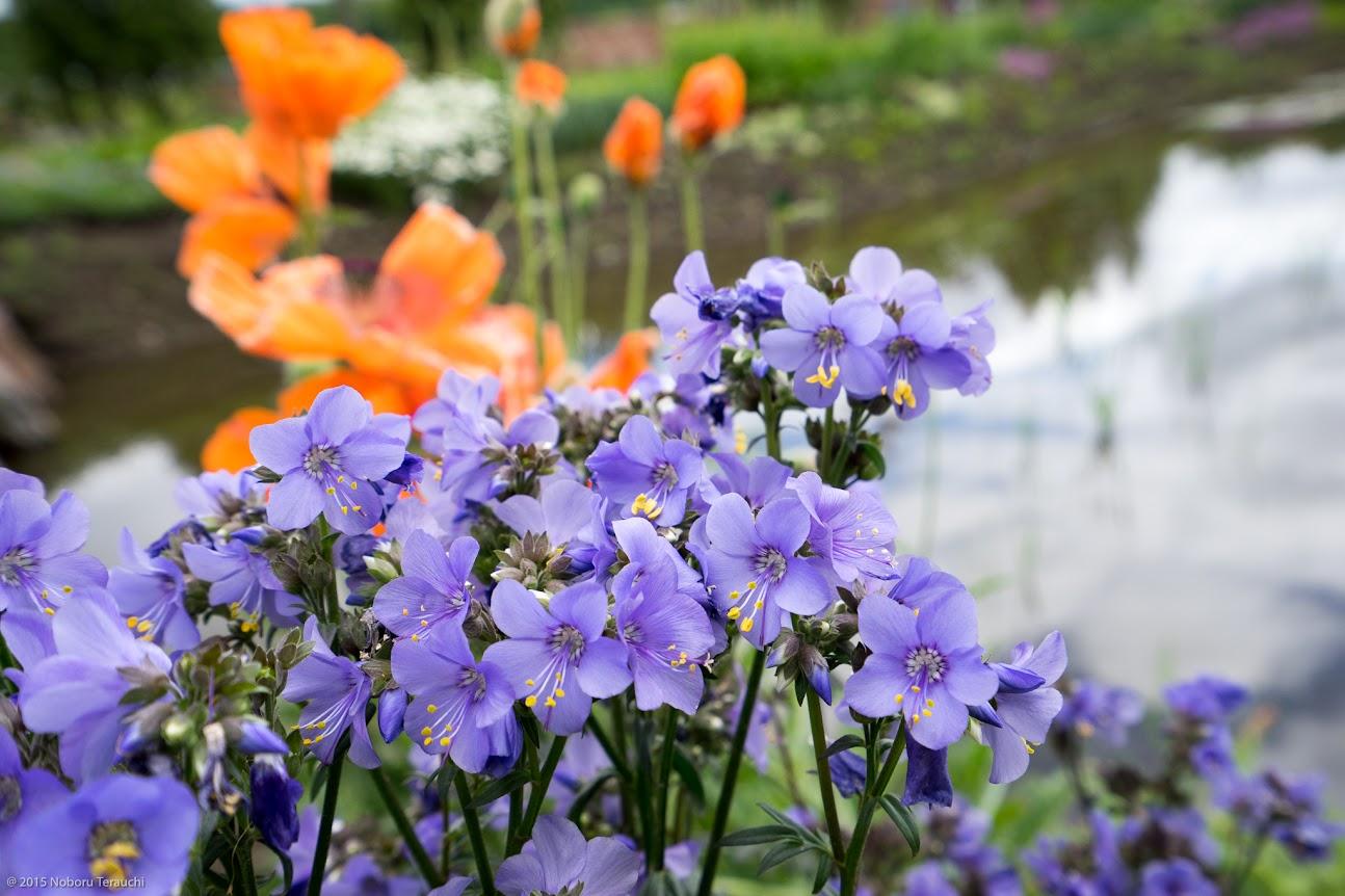紫の花達の囁き