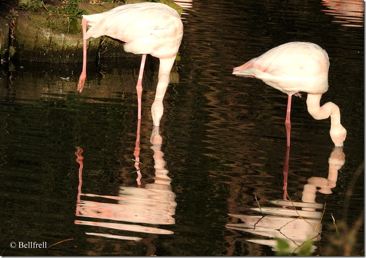 Flamingogymnastik 1