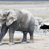 031-olifantetosha.jpg