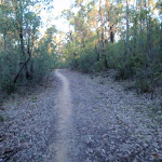Management trail to Euroka camping area (152025)