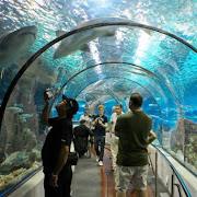 wielkie akwarium  w Hurghada.jpg