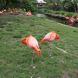 Zoo Snooze 2015 - IMG_7337.JPG
