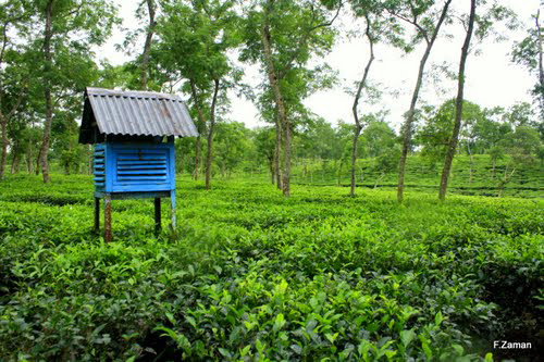 Guard house on a tea garden at srimangal