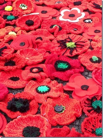 anzac day poppies close up