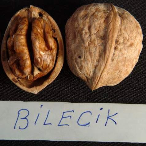 Билецик грецкий орех