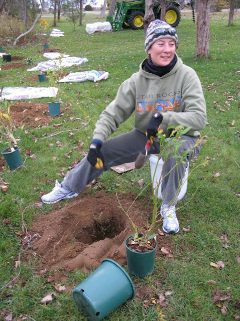 Hammo Planting - Shannon Schiesser - IMG_4886.JPG