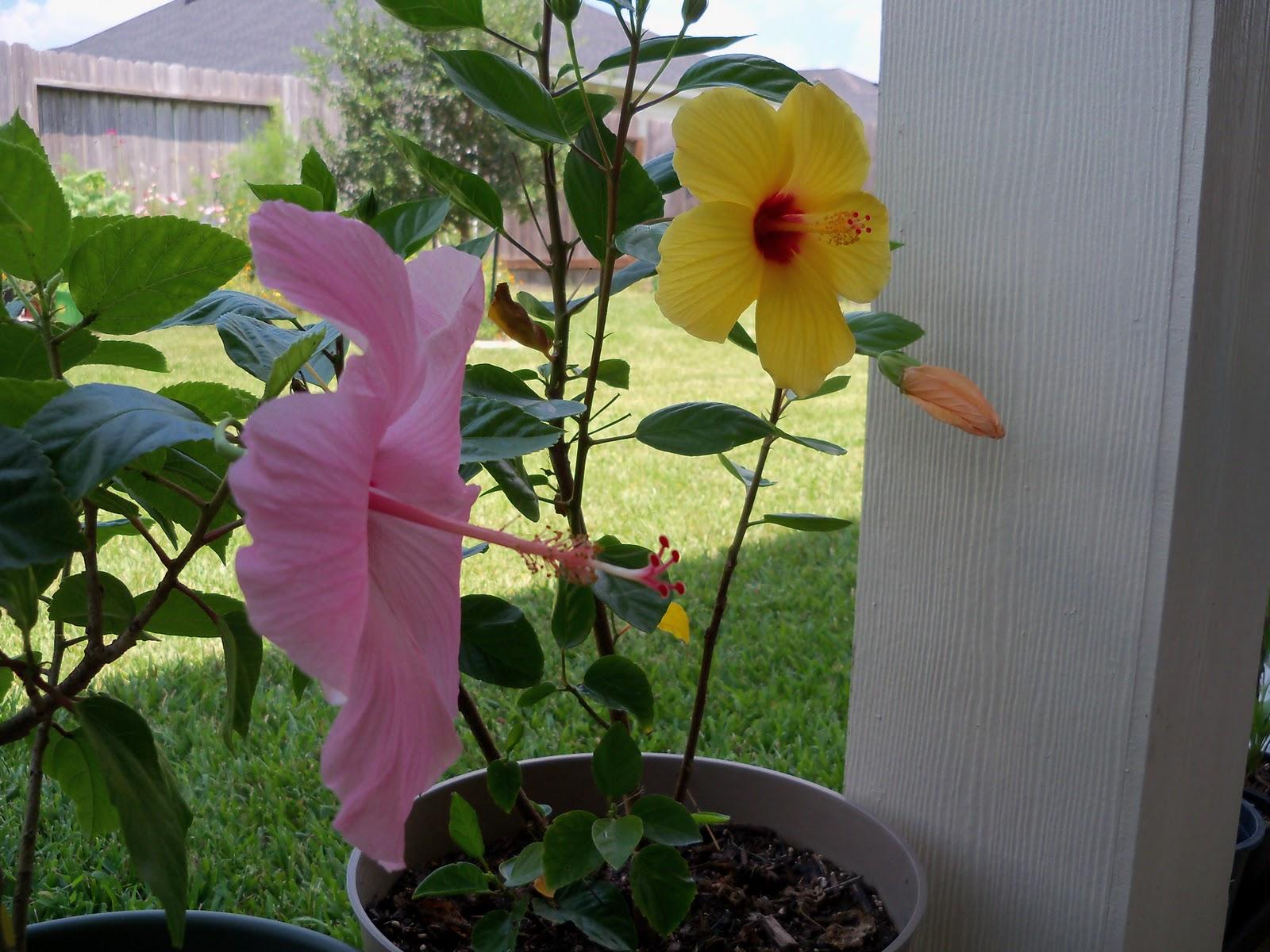 Gardening 2010, Part Three - 101_4932.JPG