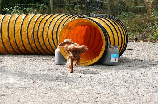 Gøy å løpe tunnel. Foto M. © K