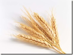 wheat grain-3