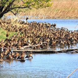 Kimberley Parry wetlands 2012-07-15