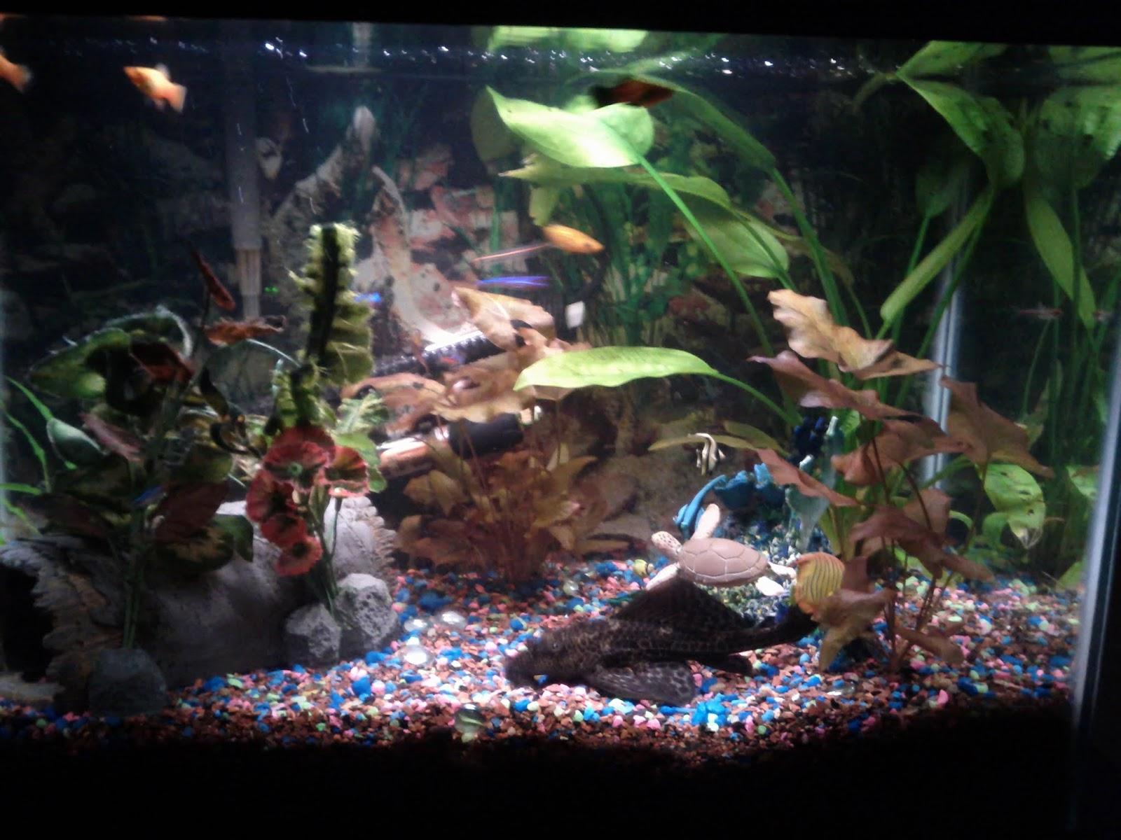 Fish - IMG_20120930_211335.jpg
