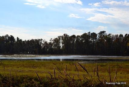Waterfowl habitat