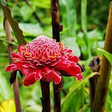 06-23-13 Big Island Waterfalls, Travel to Kauai - IMGP8831.JPG