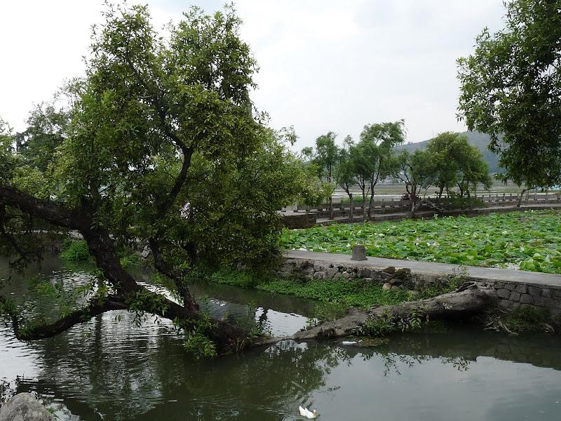 Chine .Yunnan,Menglian ,Tenchong, He shun, Chongning B - Picture%2B718.jpg