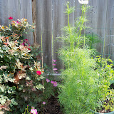 Gardening 2010, Part Two - 101_3083.JPG