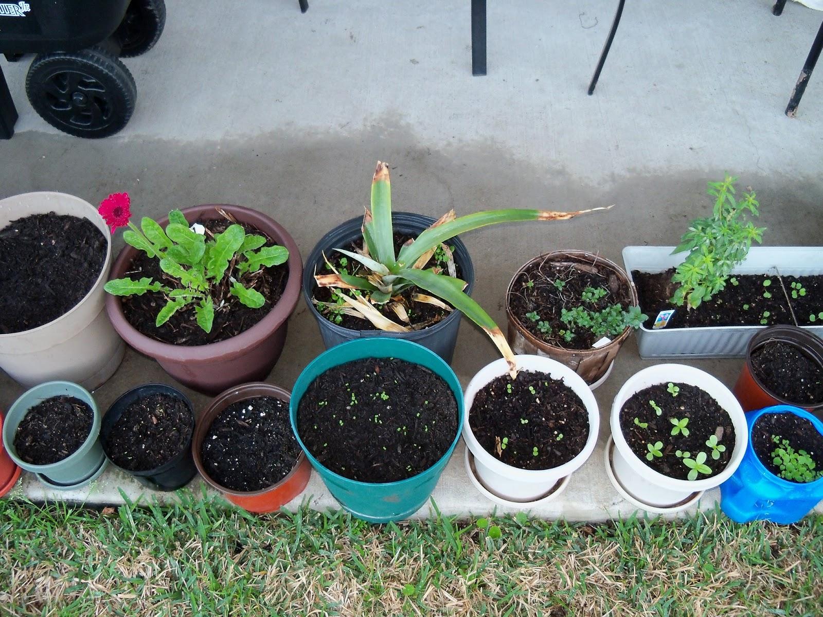 Gardening 2011 - 100_6760.JPG