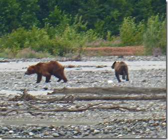 Mama Bear and Baby Bear on Klehini River