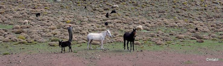 Photo: berberskej monitoring