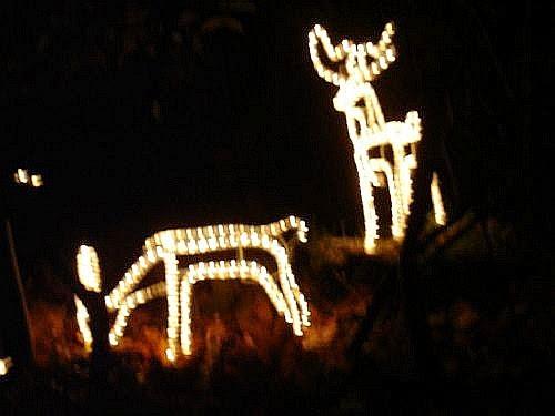 Christmas Lights 2005 - xmaslights2005078.jpg
