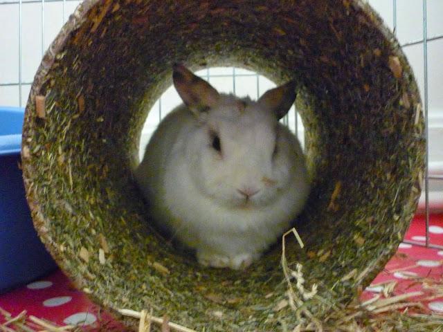Mirana, lapine blanche-[adoptée] Mirana21