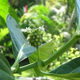 Tree Fruit - IMG_0915.JPG
