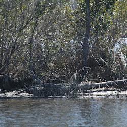 Fowl Marsh from Boat Feb3 2013 201