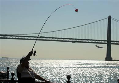 Pierfishing 0