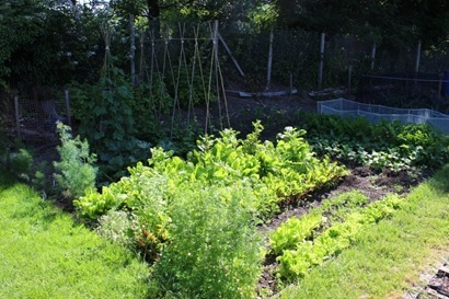 shade-garden-vegetables