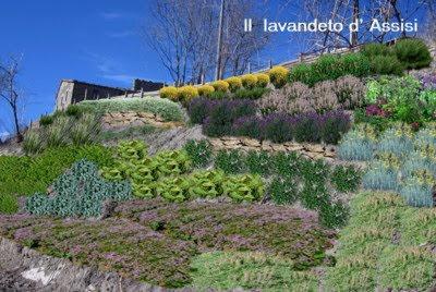 Progetti giardini online gratis progetti giardini privati - Piante striscianti per scarpate ...