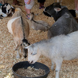 Fort Bend County Fair 2015 - 100_0209.JPG