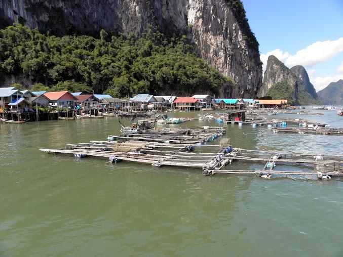 https://lh3.googleusercontent.com/-RJh3wzsv4Ls/Up0I0-2MOeI/AAAAAAAAEOU/BT-HY2bNAJU/w677-h508-no/Tajlandia+2013+619.JPG