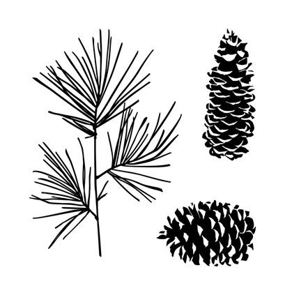 perfectly pine 637c7f64-b75c-46c4-ae2a-83797d5d51bb
