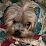 Sundy Thang's profile photo