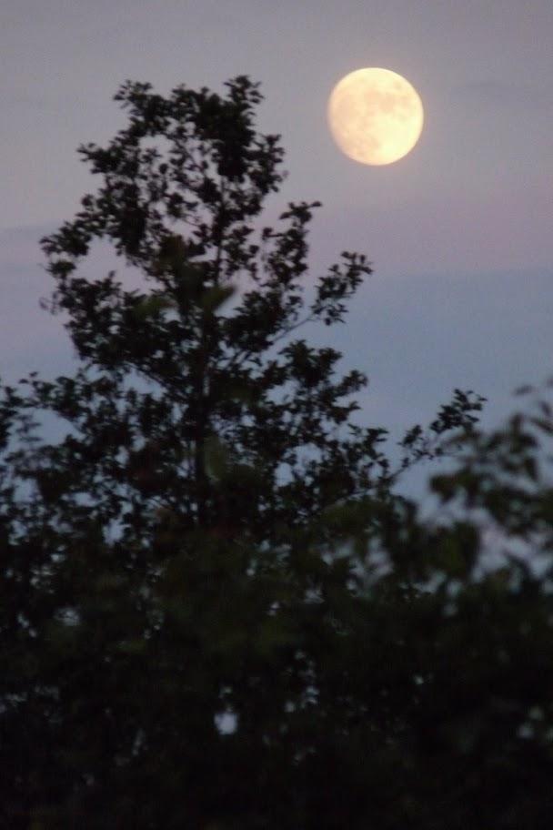 Nacht van Kompas - P1030671.JPG