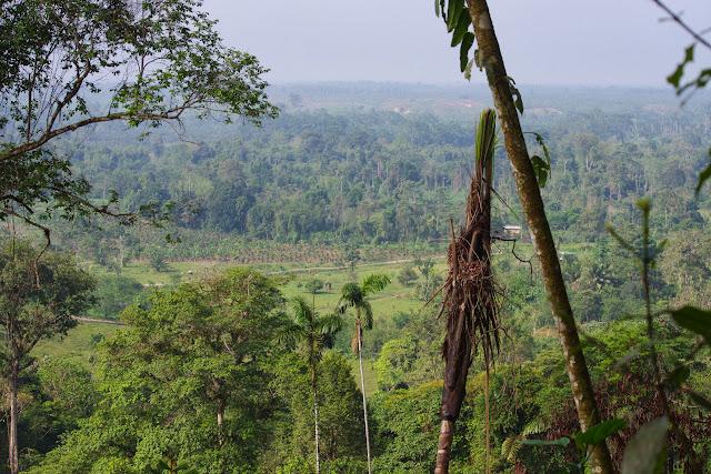 Déforestation et palmiers à huile. Tunda Loma Lodge à Calderon (San Lorenzo, Esmeraldas), 27 novembre 2013. Photo : J.-M. Gayman