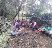 Anak Rumah Koran Amati Pohon Pacco - Pacco, Pohon Berbunga Terindah di Dunia
