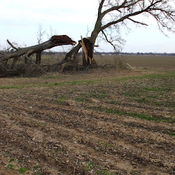 Farm Storm Damage - 2008
