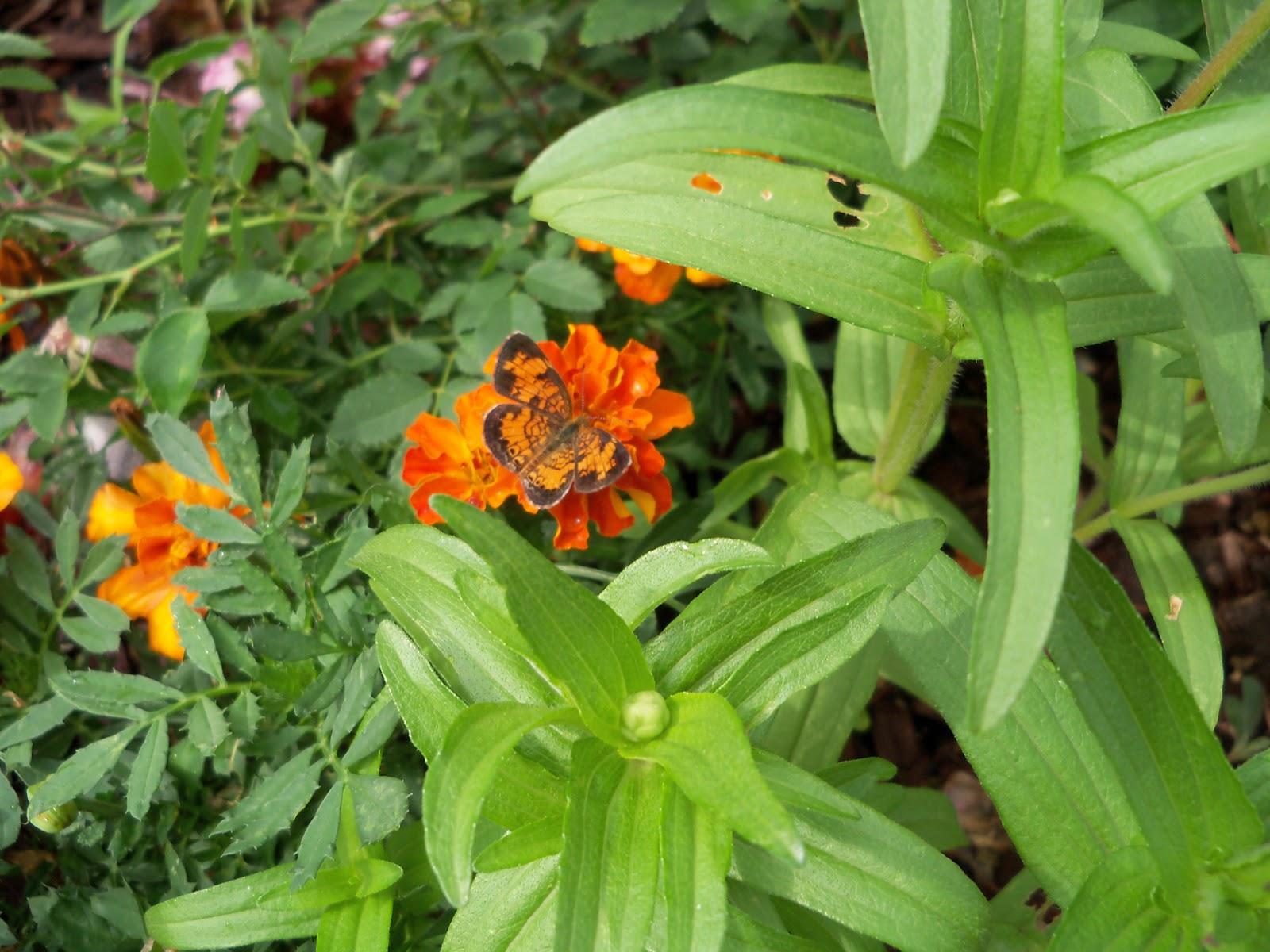 Gardening 2010, Part Two - 101_2197.JPG