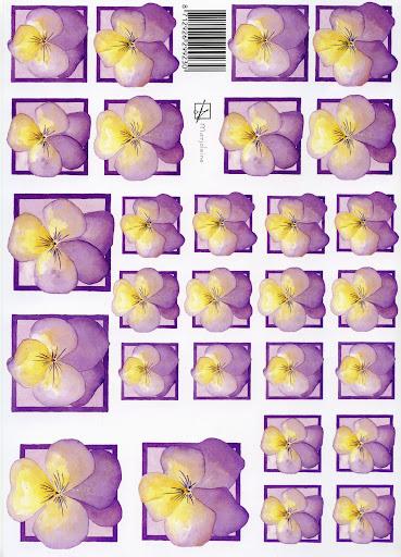 viooltje.jpg