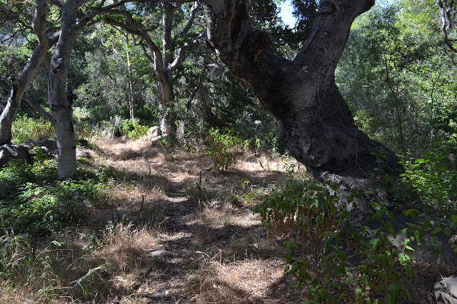 trail under oaks