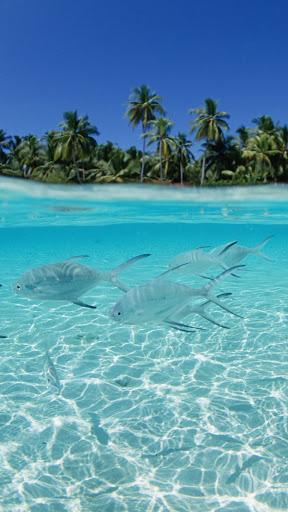 природа Мальдив