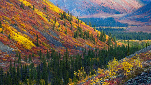 Autumn in the Ogilvie Mountains, Yukon, Canada.jpg
