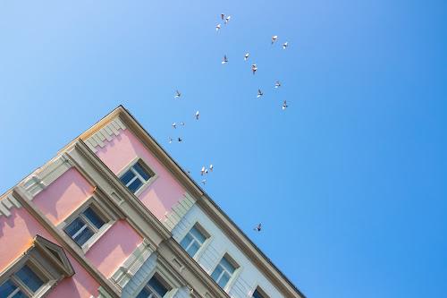Birds, Prague