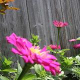 Gardening 2012 - IMG_3744.JPG